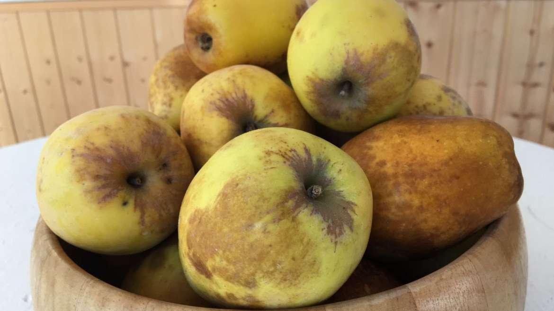 Manzanas de Beneixama y perellons