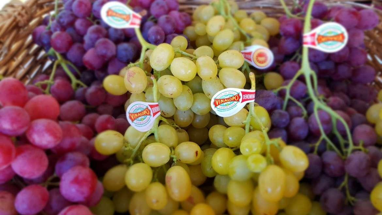 La Uva Embolsada del Vinalopó vuelve un año más a Fruit Attraction