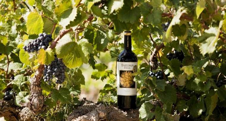 Bodegas Volver revalida sus éxitos en Wine Spectator 2019