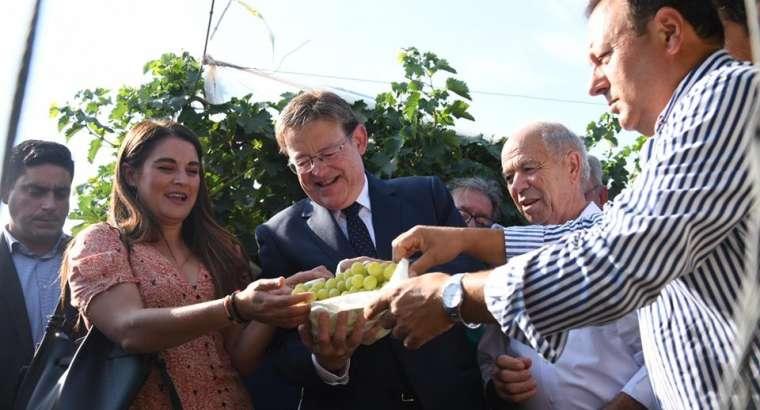 La vendimia de la uva embolsada comienza con una previsión de 46 millones de kilos